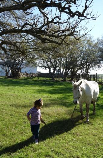 Sacar caballo a paseo